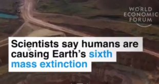 animals will become extinct