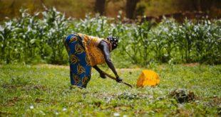 farmer in burkina faso