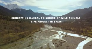 Combatting illegal poisoning of wild animals: LIFE project in Spain