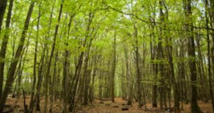 'Double woodland planting to tackle climate breakdown'