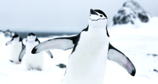 Film stars and penguin scientists voyage to the Antarctic with Greenpeace to highlight ocean threats
