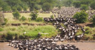 Human-wildlife conflict threatens protected reserves in East Africa