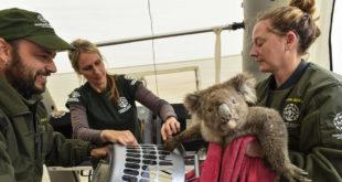 On Australia's Kangaroo Island, a fight to stay alive