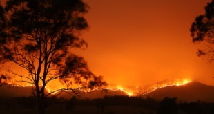 The Australian bushfire catastrophe and how to help