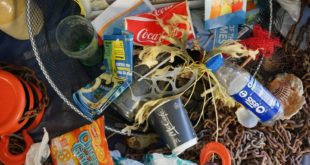 £11m project to remove plastic from the English Channel