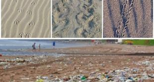 Add this to your story and amplify the effort  to raise awareness. #BeatPlasticP...