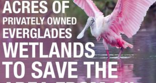Amazing news!!  This area of land is home to more than 60 threatened and endange...