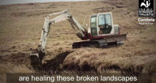 Climate Emergency - Help us protect Cumbria's Peatlands