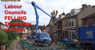 Climate Emergency vs Labour Tree Felling Councils Reality - Sheffield General Election 2019