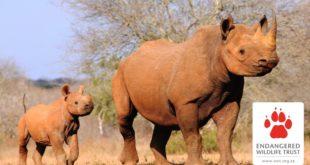 EWT responds to China's illegal wildlife trade ban