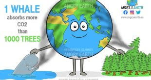 When it comes to saving the planet, one whale is worth thousands of trees.  Grea...