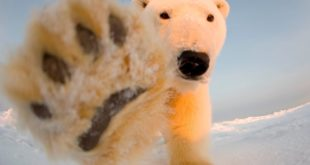 'Abundance' of Artic ice a concern for 'Polar bears' and 'climate change luvvies'