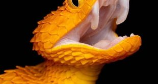 A bush viper  - Follow   Follow   - Credit:  -  1  #climate #climatechange #natu...