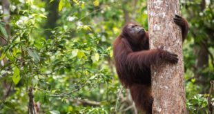 In pictures: celebrating forest life on International Forests Day