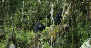 The Congo rainforest is losing its ability to absorb carbon dioxide. That's bad for climate change.