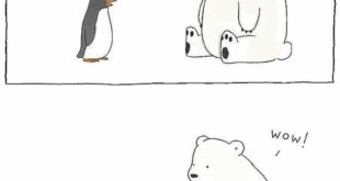 We just put this here to brighten your day  Penguins and Polar Bears live in ar...