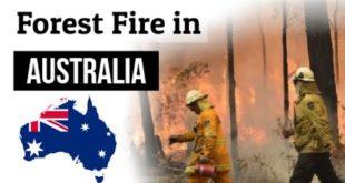 Australia में Forest Fire | Climate Emergency (जलवायु आपातकाल) | आस्ट्रेलियन Wildlife खतरे में.....