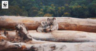 Australia - World Deforestation Hotspot | WWF-Australia