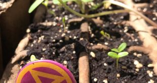 Can't join an XR DC tree planting team? You can still #RebelForLife by planting ...