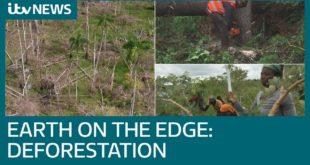 Earth on the Edge: How the global deforestation crisis is affecting us all right now   ITV News
