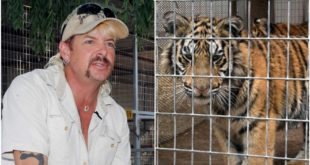 Here's What Wild Animal Experts Want You To Know About 'Tiger King'