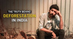 Indiatimes - The Truth Behind Deforestation In India