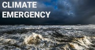 More Than 11,000 Scientists Just Declared A Climate Emergency. Unavoidable Human Suffering Is Near.