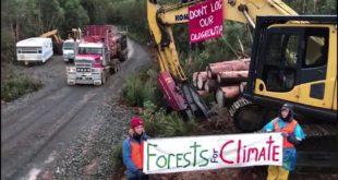 Native Forest Logging – Wentworth Hills, Tasmania