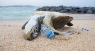 Satellites can identify ocean plastic pollution