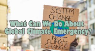 What Can We Do About Global Climate Emergency?