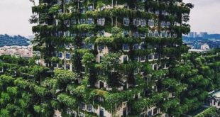 What I want to see Green Jungle everywhere but can see only Concrete Jungle........