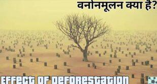 वनोन्मूलन Effect of Deforestation