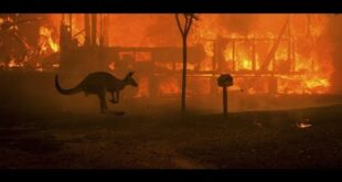 AUSTRALIAN FIRE: WHY CANT BE BE EXTİNGUİSHED FOR 4 MONTHS, WHAT İS THE BALANCE SHEET? #FİRES #NATURE