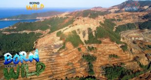Born to Be Wild: Effects of deforestation in the Philippines
