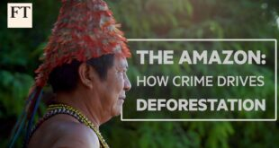 Brazil's Amazon rainforest: how crime drives deforestation | FT Features