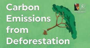 Carbon Emissions from Deforestation