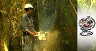 Deforestation Is Threatening Papua New Guinea's Indigenous Communities (1999)