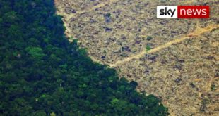 Deforestation in Amazon soars to highest in decade