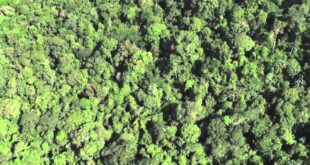 Deforestation in the Amazon Rainforest: Impact on Animals