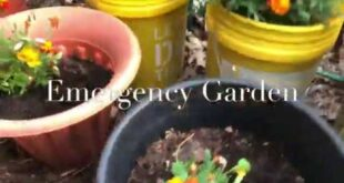 Episode 228: How To Grow Cheap Healthy Food In Your Emergency Garden. Part 2