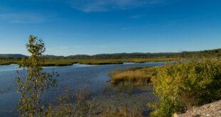 How nature restoration reduces flooding