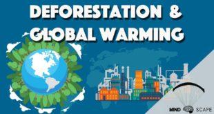 Importance of trees   Deforestation Explained