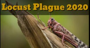 Locust swarms and Climate Change - Food scarcity is the next crisis