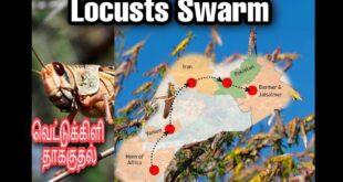 Locusts Swarm (வெட்டுக்கிளி தாக்குதல்) மீண்டும் ஒரு ஆபத்தை எதிர்கொள்ளும் இந்தியா ????