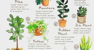 TOP 10 HOUSEPLANTS  Fresh oxygen supply ️️ . . . . #planting #plants #oxygen #e...