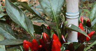 URBAN VEGETABLE GARDEN  Having a vegetable garden in the city, especially in Tu...