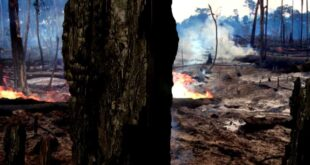WWF Rainforest: Deforestation Effects