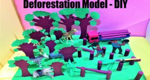deforestation model making for school science exhibition   diy project at home easily