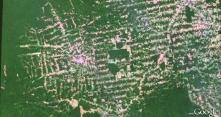 Amazon deforestation animation in Google Earth