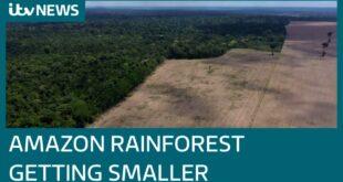 Amazon in turmoil as deforestation rages on despite coronavirus pandemic | ITV News